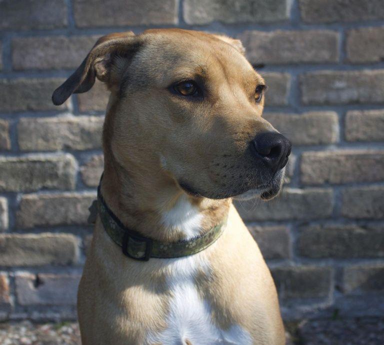 Pitbull Puppies For Sale In Cincinnati Ohio