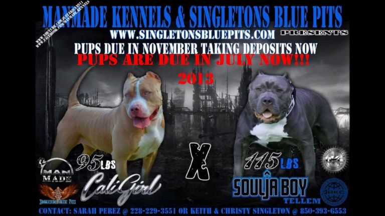 Pitbull Puppies Missouri