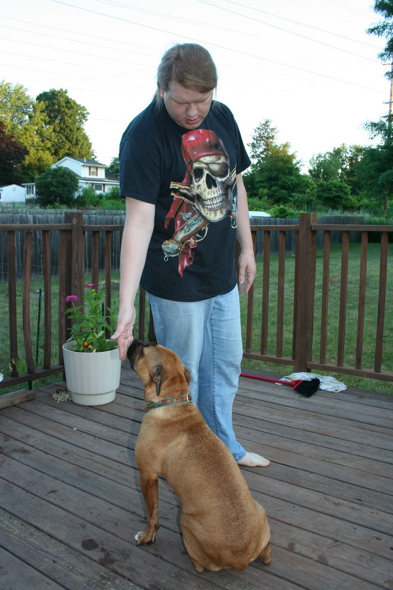 Pitbulls For Adoption