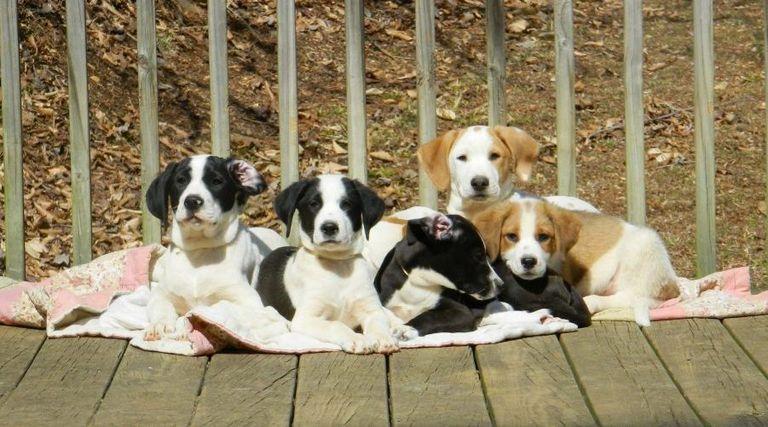 Polk County Tn Animal Shelter