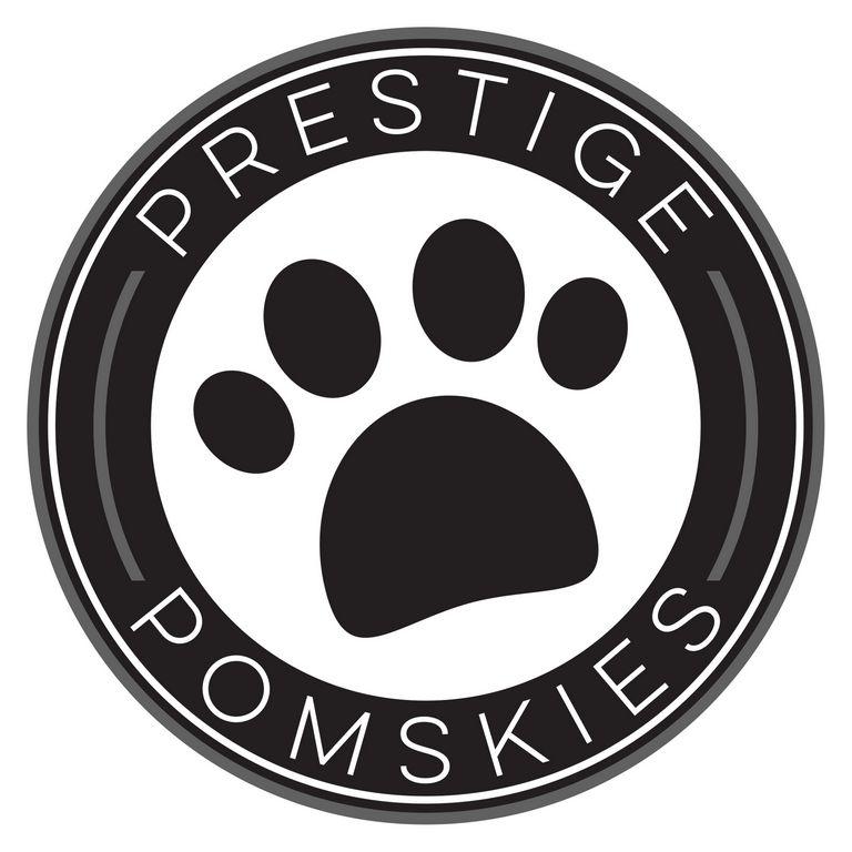 Pomsky Dog Virginia