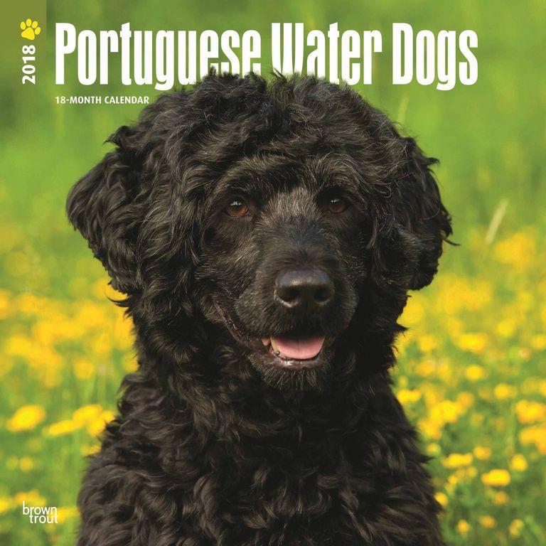 Portuguese Water Dog Rescue Uk