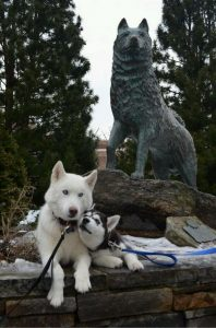 Psychiatrists In Ct That Accept Husky