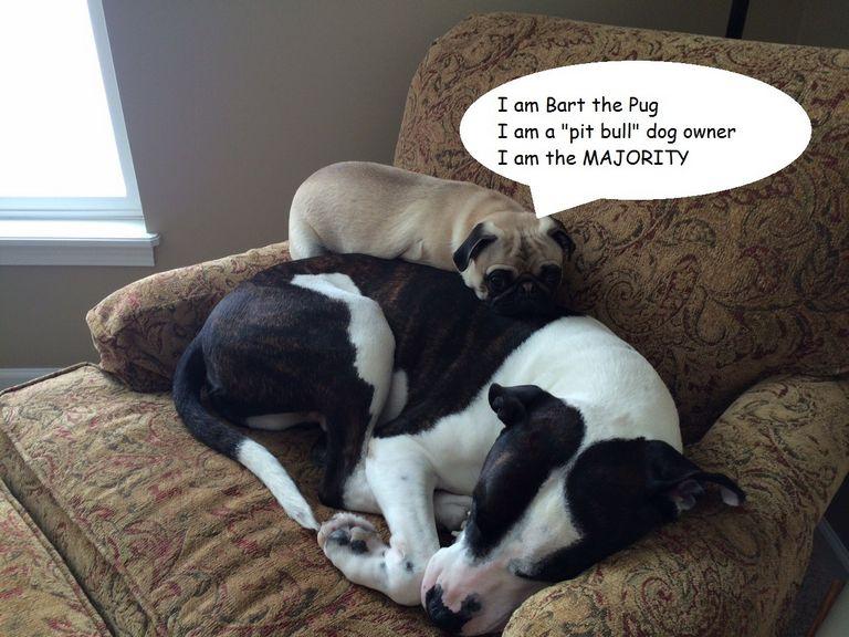 Pug Breeders In Ny