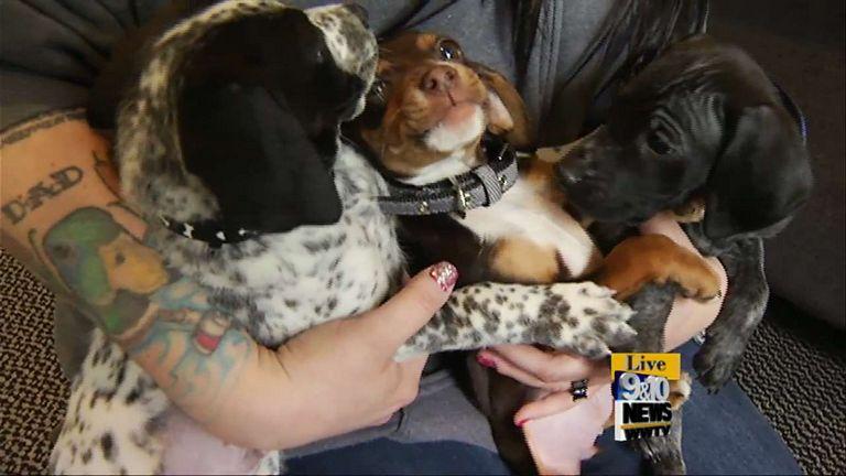 Puppies For Adoption Buffalo Ny
