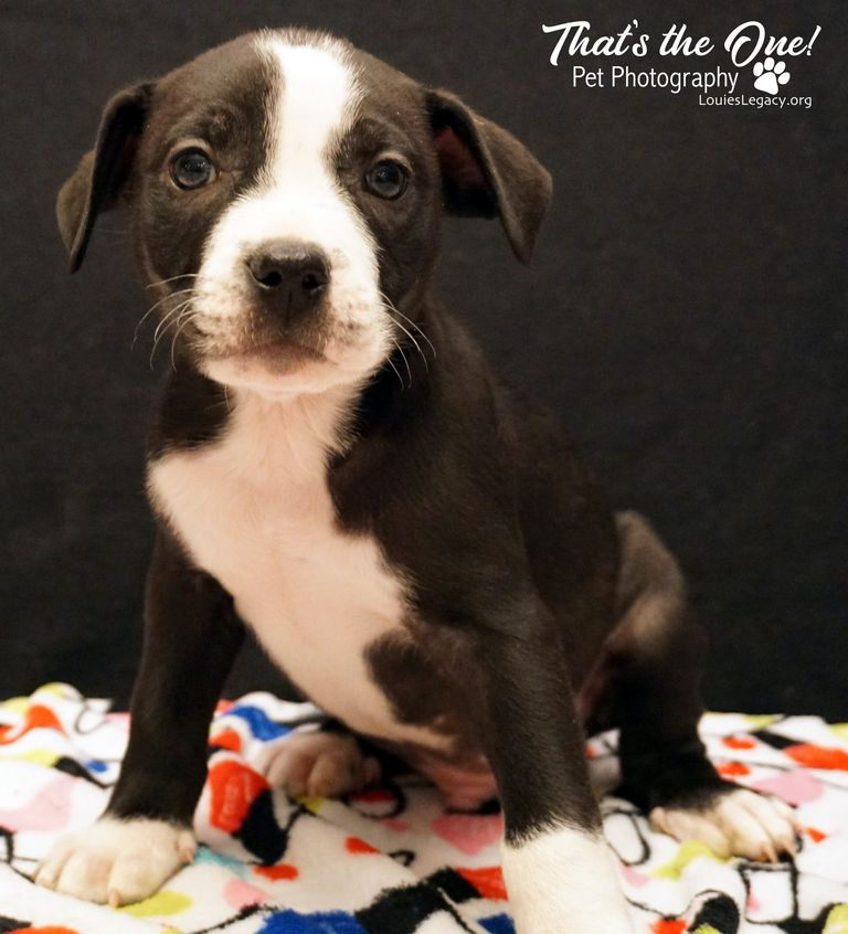 Puppies For Adoption Cincinnati