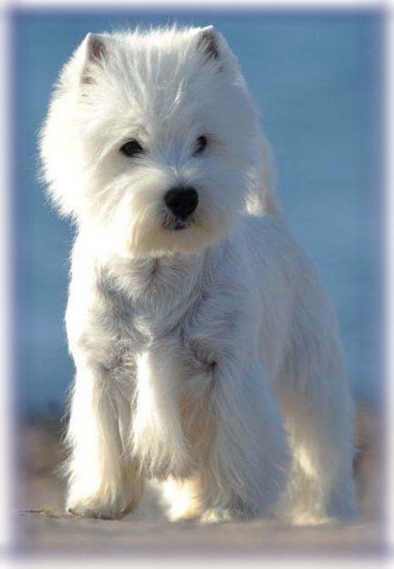 Puppies For Adoption Dayton Ohio