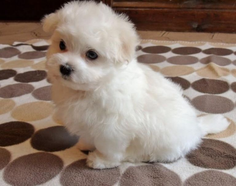 Puppies For Sale Baton Rouge
