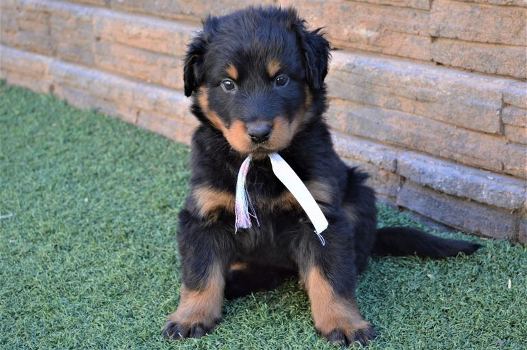 Puppies For Sale By State