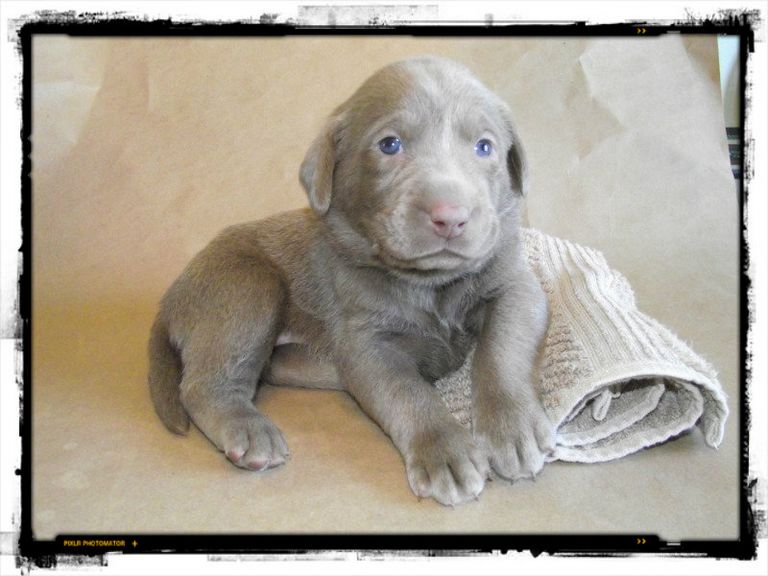 Puppies For Sale In Buffalo Ny