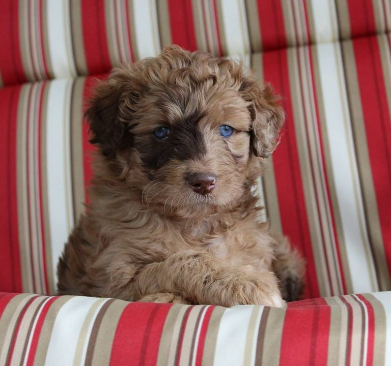 Puppies For Sale In Nh Under 300