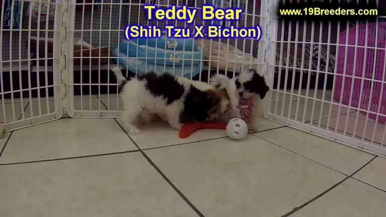 Puppies For Sale In Ohio Craigslist