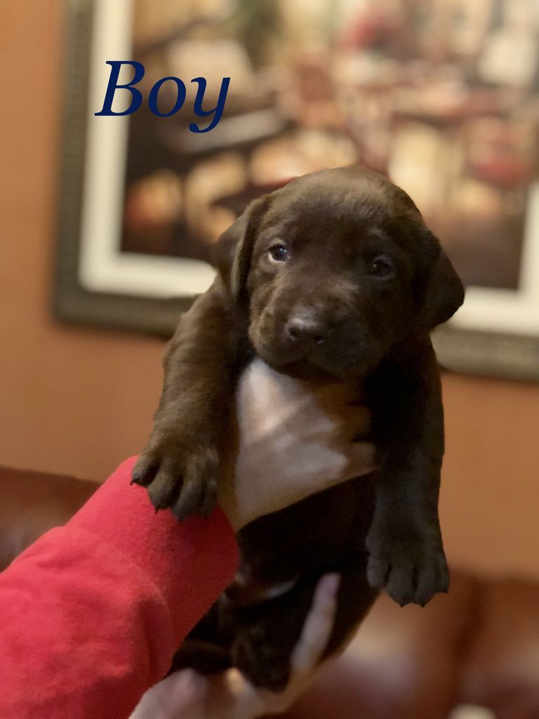 Puppies For Sale In Port St. Lucie