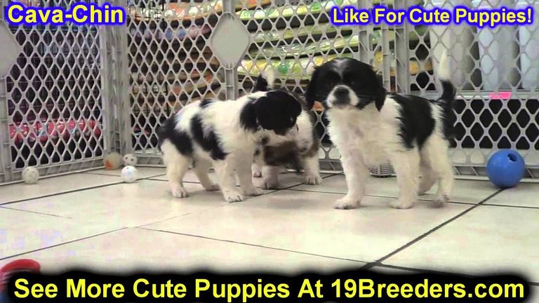 Puppies For Sale In Roseburg Oregon
