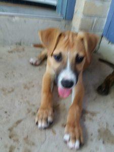 Puppies For Sale In San Antonio Tx