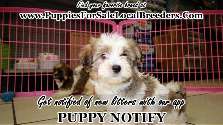 Puppies For Sale In Statesboro Ga