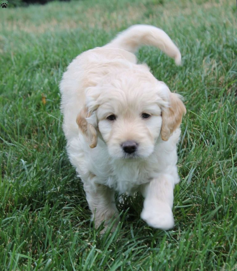 Puppies For Sale In Va Under $300