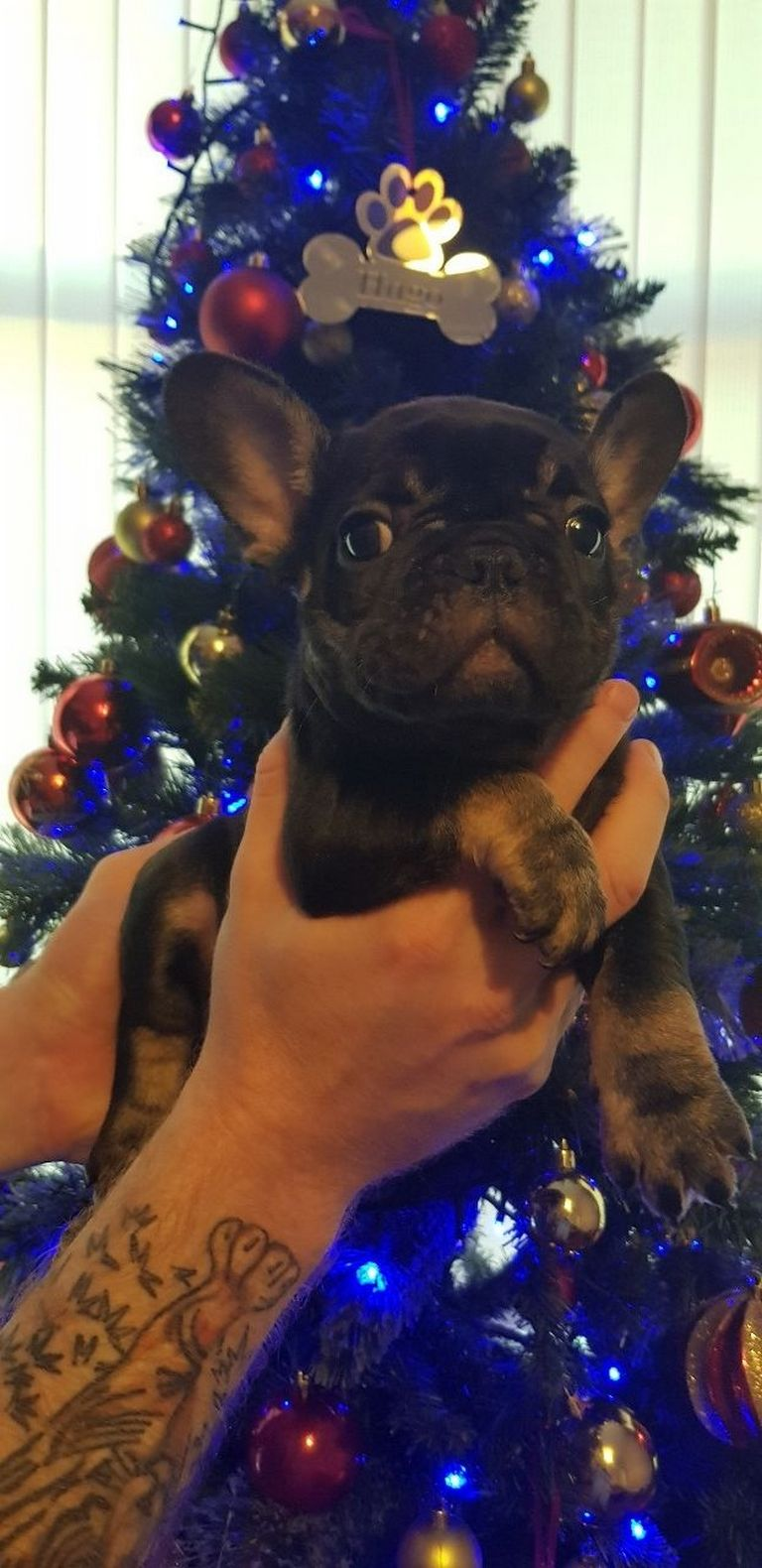 Puppies For Sale Oahu | Top Dog Information