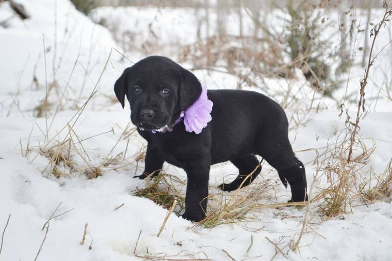 Puppies For Sale Wisconsin