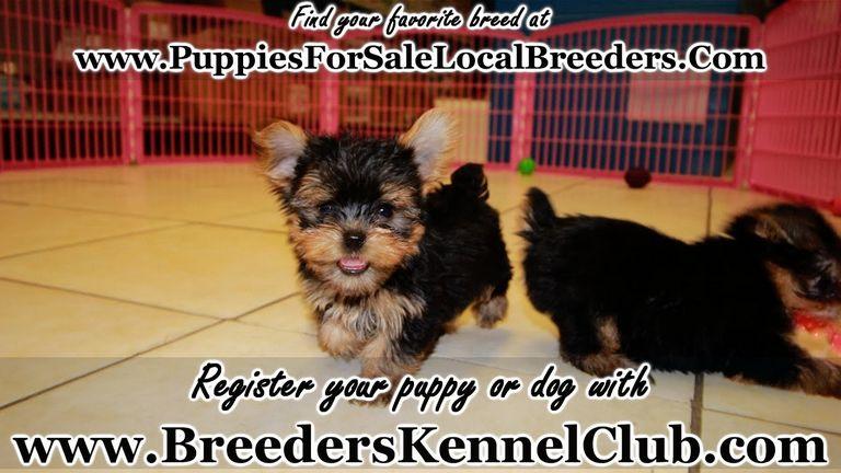 Puppies Hinesville Ga