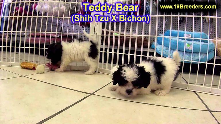 Puppies Shichon Teddy Bear