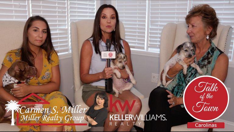Puppy Adoption Denver