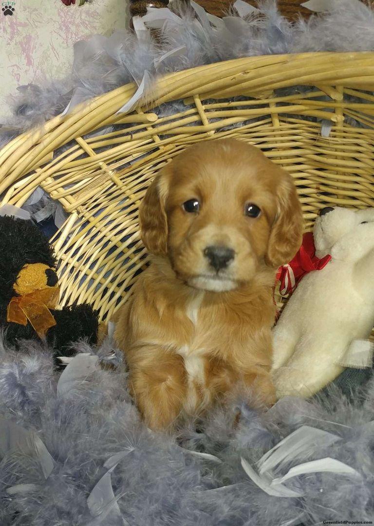 Puppy Finder By State