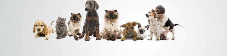 Puppy Love Dog Salon St Joseph Mo