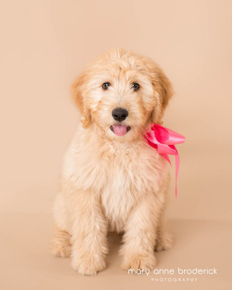 Puppy Stores In Nj