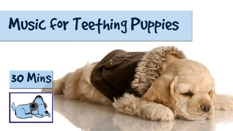 Puppy Teeth Stages
