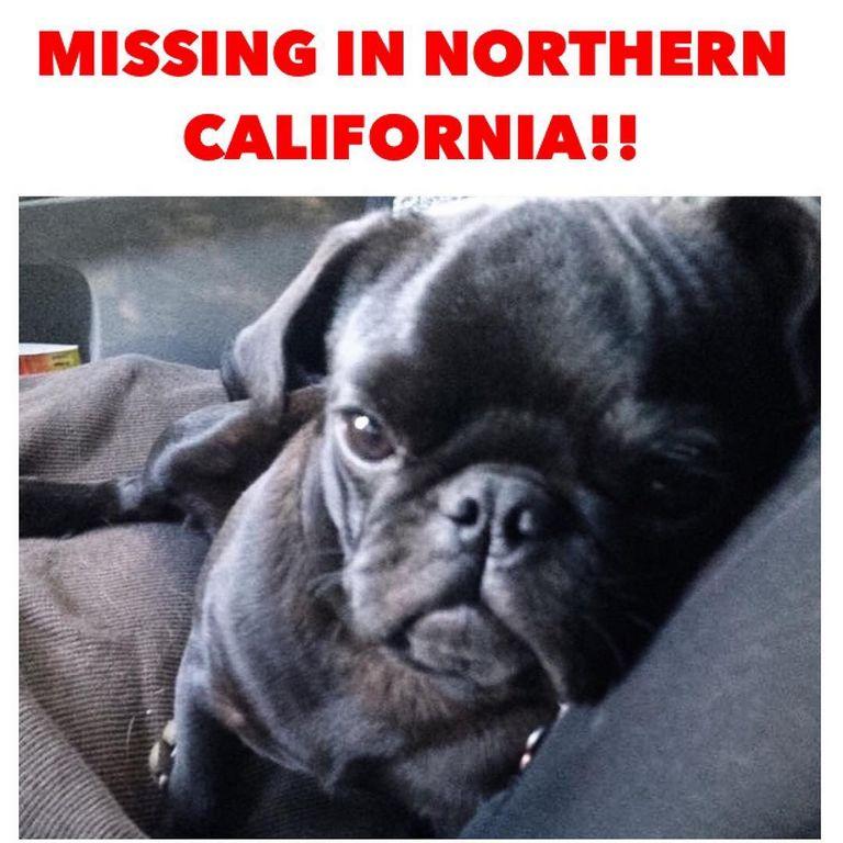 Queen City Bulldog Rescue Top Dog Information