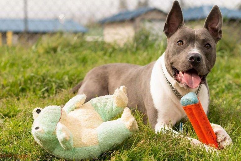 Reedsport Animal Shelter Top Dog Information