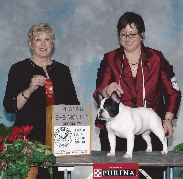 Retired Boston Terrier Florida