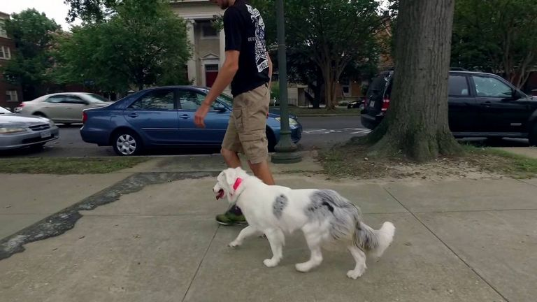 Richmond Dog Training