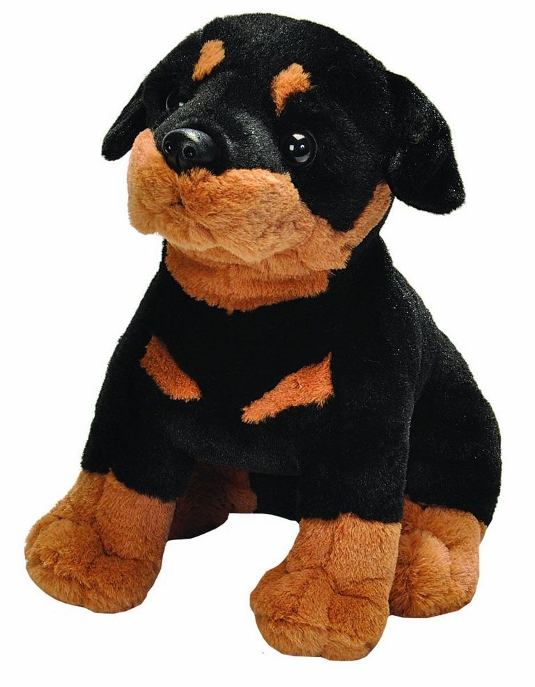 Rottweiler Puppies For Sale In Florence Sc | Top Dog Information