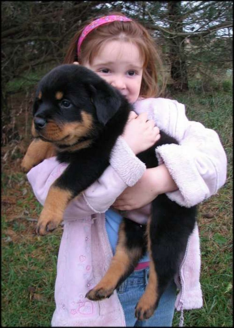 Rottweiler Puppies For Sale In Sc Craigslist