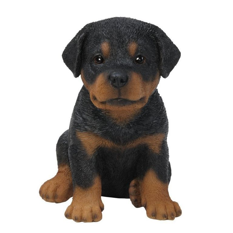 Rottweiler Puppies For Sale In Sumter Sc