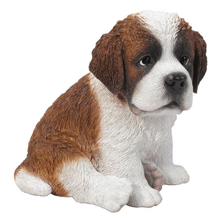 Saint Bernard Puppy Price