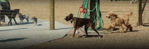 Salem Va Animal Shelter
