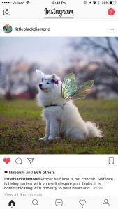 Samoyed Rescue Washington