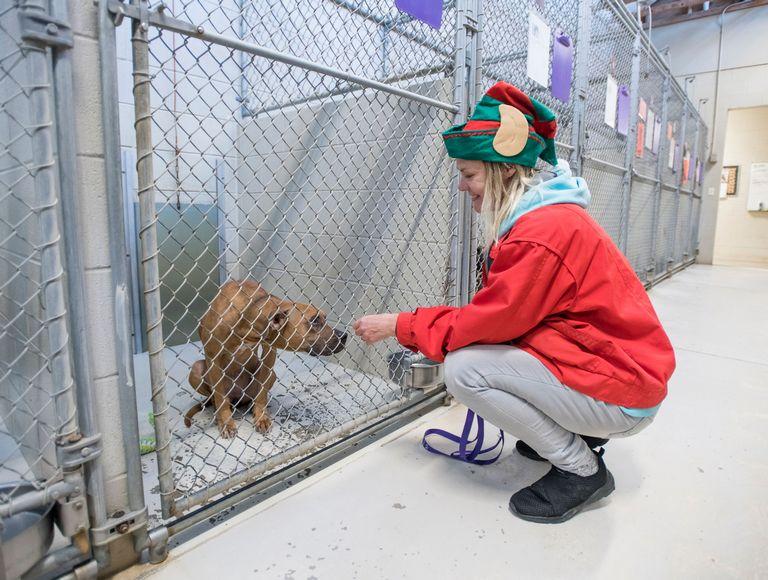 Santa Rosa Animal Shelter Adoptable Pets