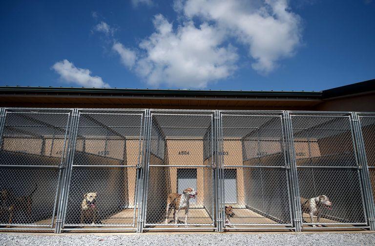 Santa Rosa County Animal Services Milton Fl 32583