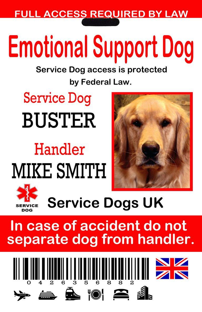 Service Dog Emotional Support