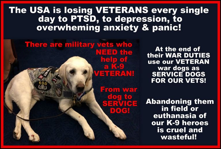 Service Dogs For Depression
