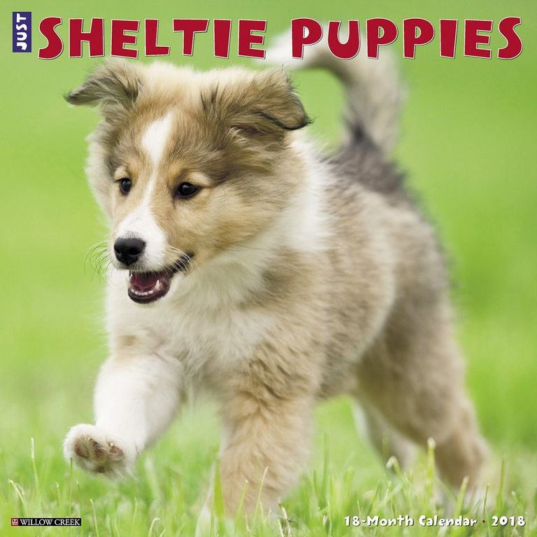 Sheltie Puppies For Sale In Delaware