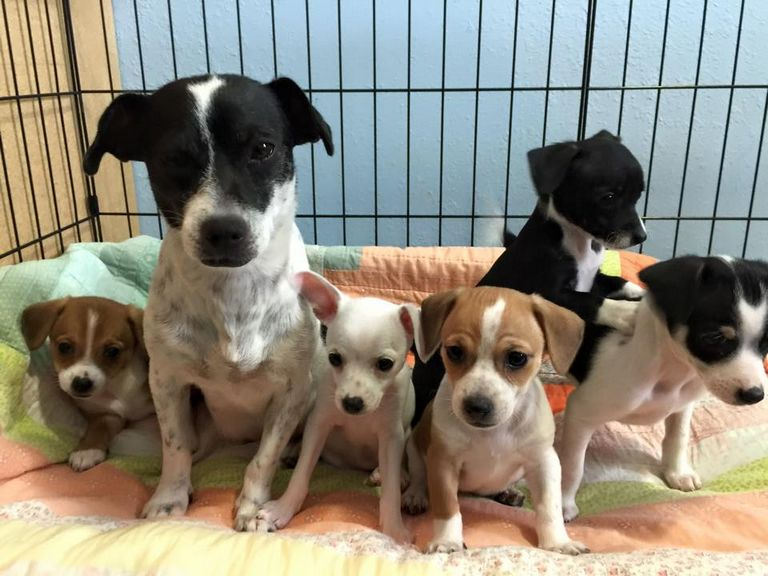 Sioux City Animal Shelter And Sioux City Iowa