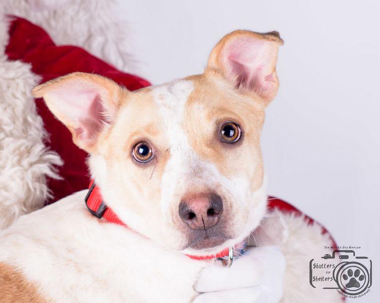 Small Dog Rescue Colorado Springs