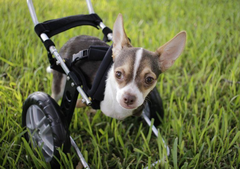 Small Dog Rescue Columbus Ohio