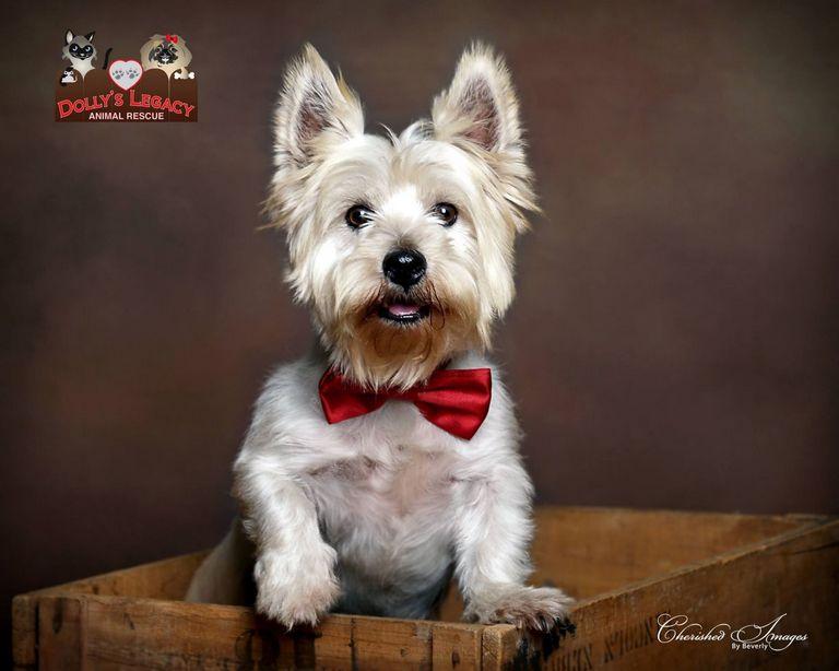 Small Dog Rescue Lincoln Ne