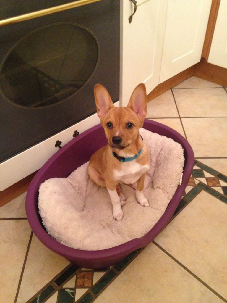 Small Dog Rescue Nc Top Dog Information